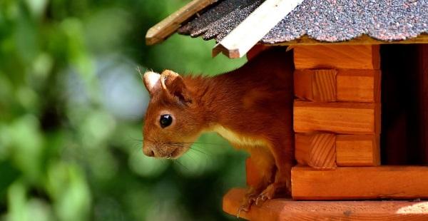 squirrel-2824540__480_Alexas