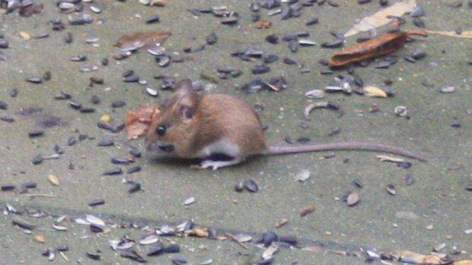 2014-12-09 Mousy02 BLOG