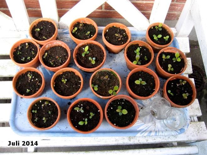 2014-07-12 11.03.42 45Pflanzen