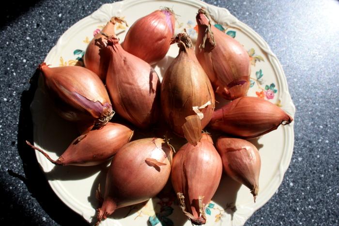 2020-08-31 14.41.32 Onions